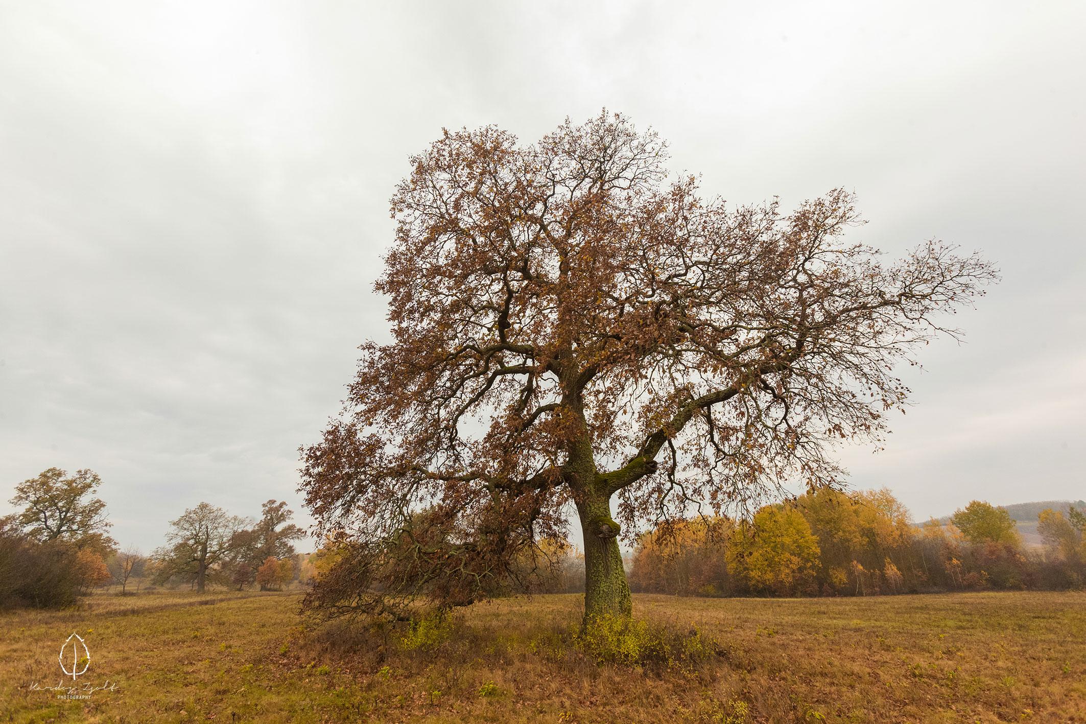 A viszlói fás legelő