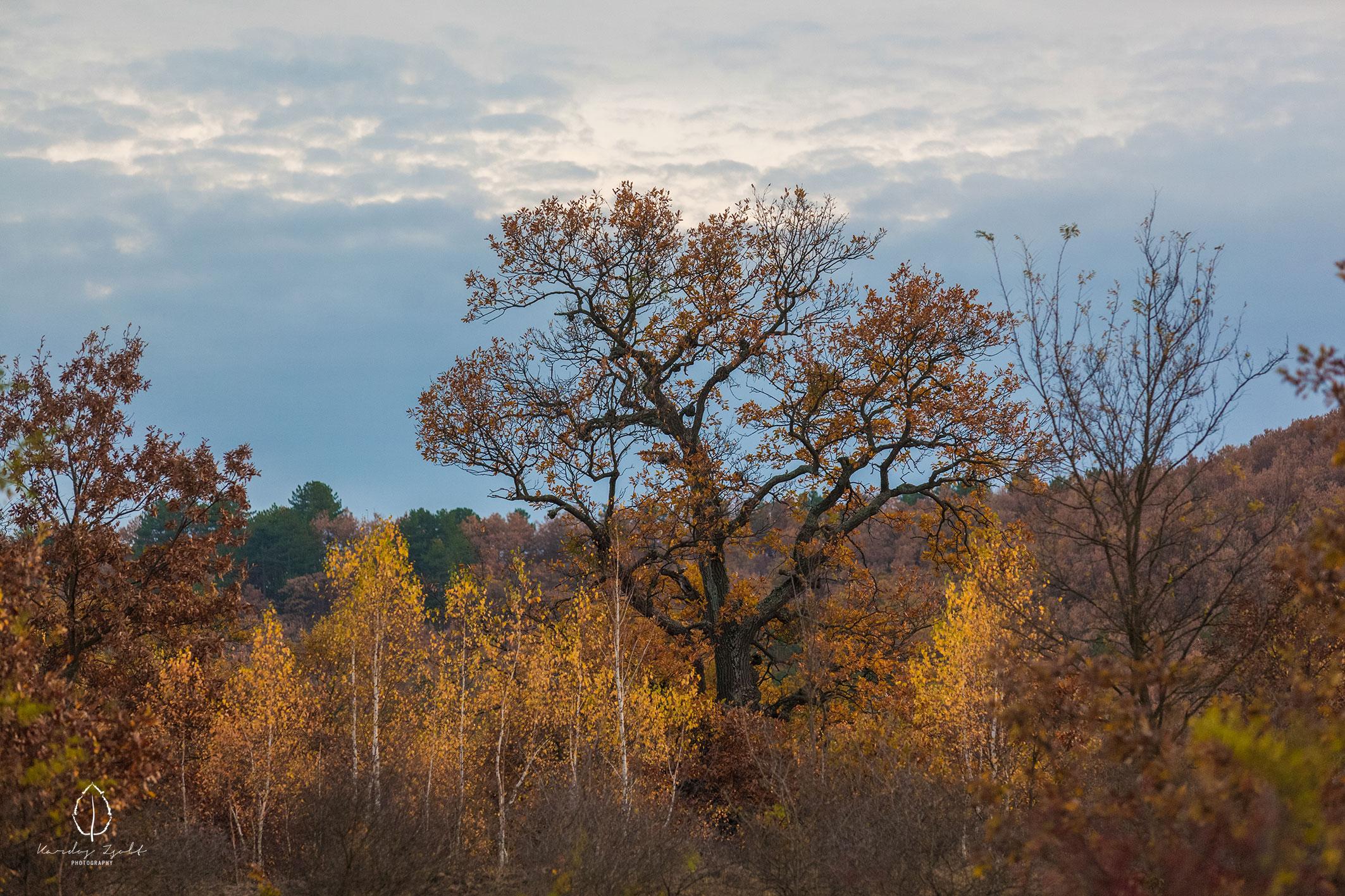 A cserépfalui fás legelő