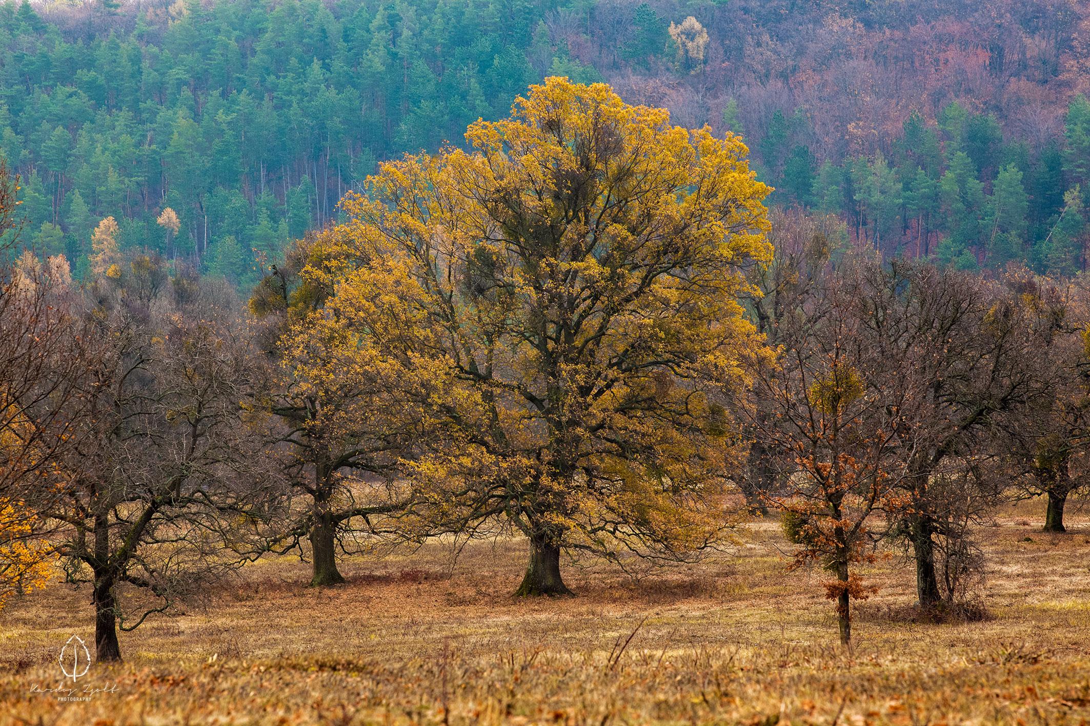 Az erdőbényei fás legelő
